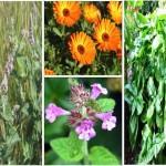 Юли и август идеални за ваканция, но и за билки