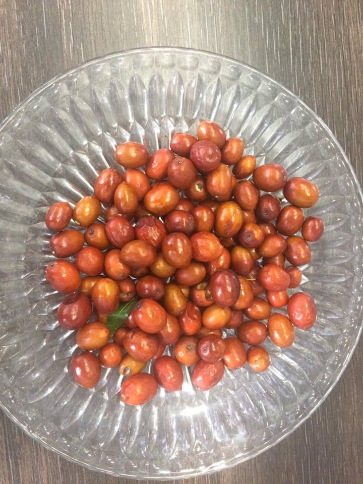 Photo of Хинап или китайска фурма е в топ 5 на полезните растения