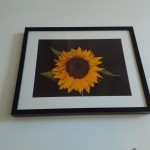 50 снимки на ученици красят стаи в Тубдиспансера