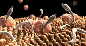 Световната здравна организация предупреди: 80% от болестите се причиняват от паразити