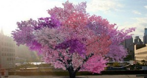 Уникално дърво ражда 40 вида плодове
