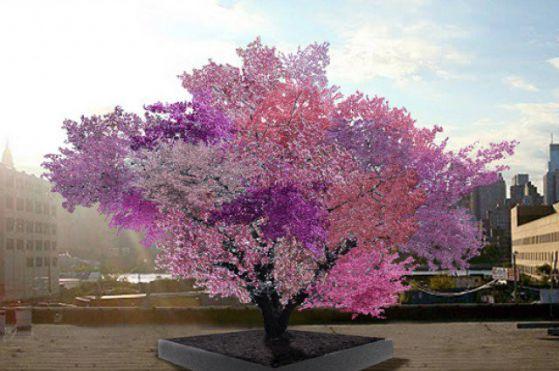 Photo of Уникално дърво ражда 40 вида плодове
