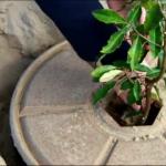 Изобретение пази дърветата от изсъхване