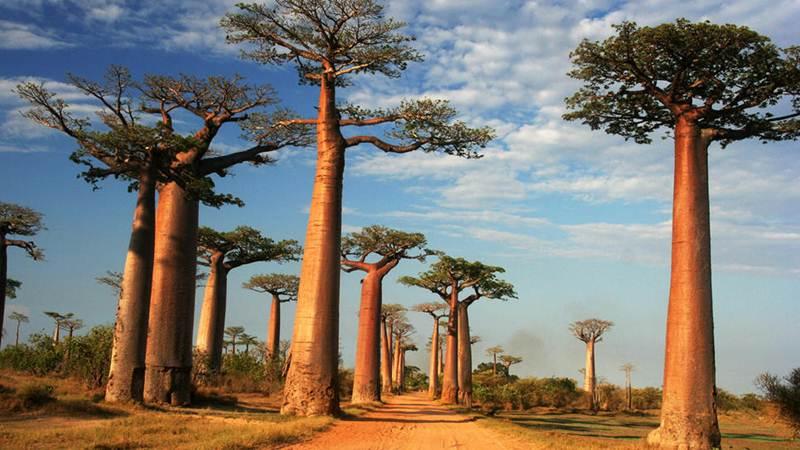 Photo of Дървото на живота е уникална храна и лекарство
