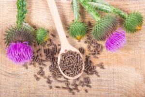 Растението помага при атеросклероза, жлъчни камъни, висок холестерол, претоварване с желязо и някои форми на рак.