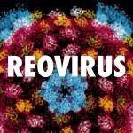 Вирус на простудата убива ракови клетки