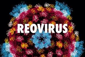 Инфекцията с реовирус протича с респираторен синдром, диспептични нарушения, обриви.