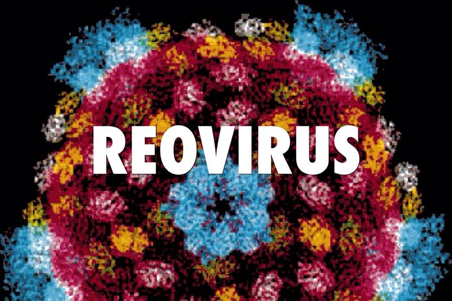 Photo of Вирус на простудата убива ракови клетки