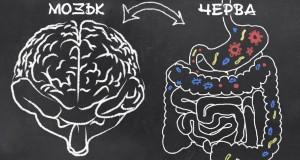 Мистериозната връзка между мозъка и червата