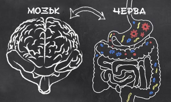 Photo of Мистериозната връзка между мозъка и червата