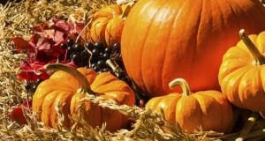 Празник на плодородието, здравословни храни и кардиолози тази събота на Централен пазар