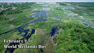 Влажните зони имат много важна роля в предпазването ни от наводнения, като те поемат и задържат голяма част от повърхностните води.