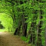 140 години история и традиции в грижата за бъдещето на гората!