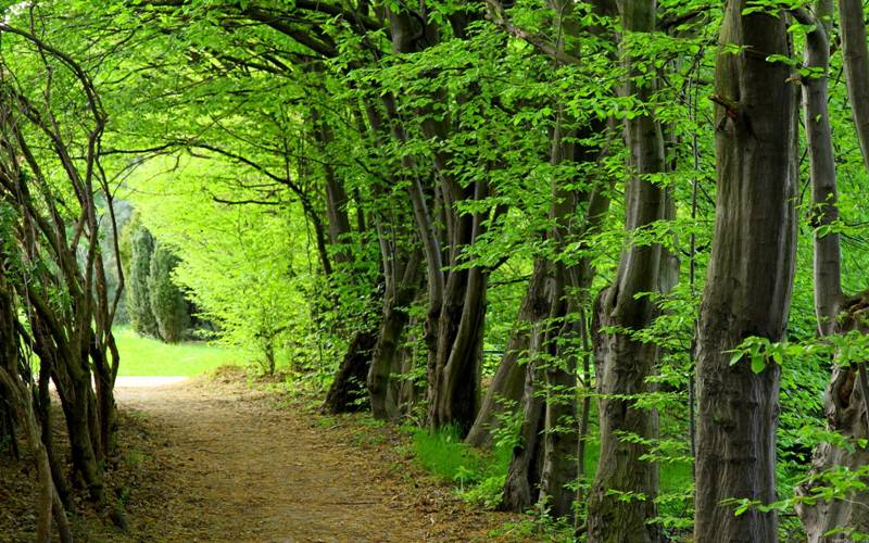 Photo of 140 години история и традиции в грижата за бъдещето на гората!