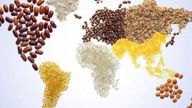 Photo of 16 октомври – Световен ден на прехраната